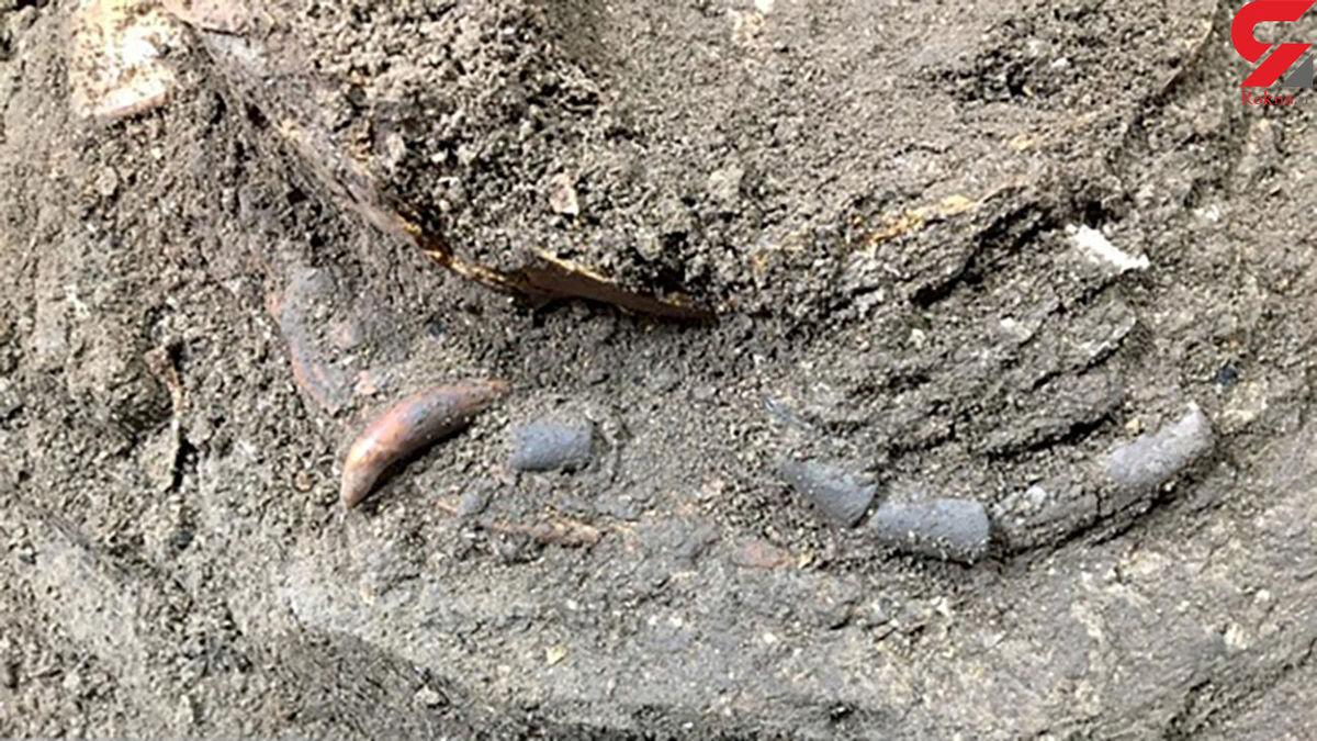 کشف اسکلت 12 هزار ساله مازندرانی؛ نشسته دفن شده است! +عکس