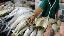 قیمت ماهی در بازار امروز (1400/01/15) +جدول